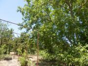 Дачный участок в Анапе СОТ Строитель